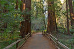 Muir Woods Trail II - Exclusive HDR Stock