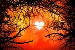 Brinspired Sunrise - Exclusive Premade Stock