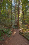 Muir Woods Trail IV - Exclusive HDR Stock
