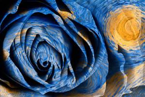 Starry Night Rose