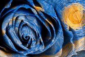 Starry Night Rose by boldfrontiers