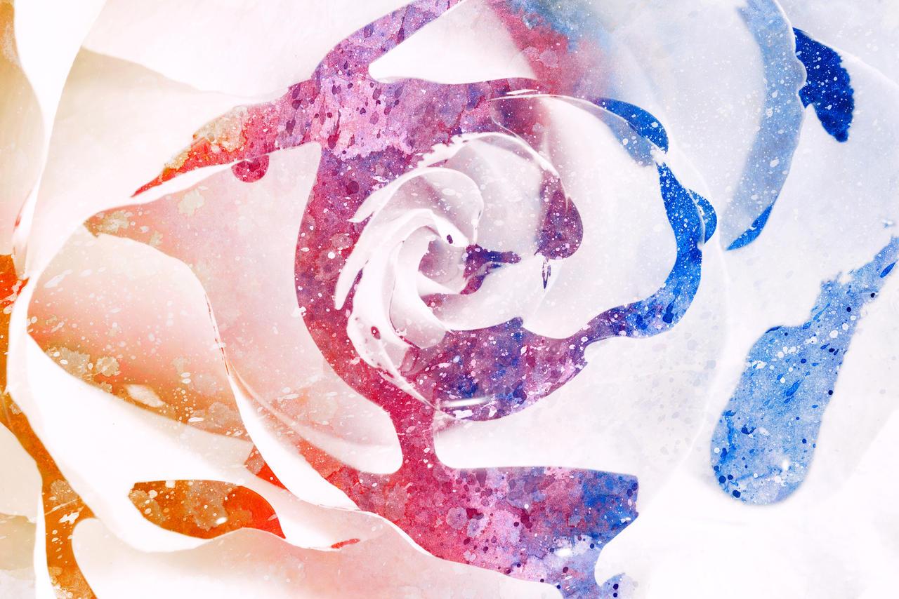 Acrylic Rose Splashes