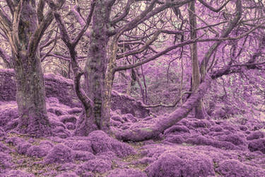 Amethyst Moss Forest by boldfrontiers
