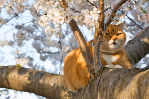 Ginger Cherry Blossom Cat (freebie) by boldfrontiers