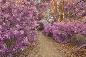 San Francisco Botanical Trail - Violet Fantasy by boldfrontiers