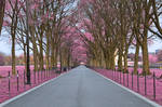 Pink Mall Promenade