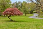 Woodend Sanctuary (freebie)