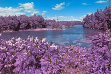 Wellesley Island River - Purple Fantasy (freebie) by boldfrontiers