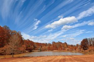 Meadowlark Autumn Sky Gardens by boldfrontiers