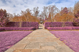 Brookside Gardens Pathway - Ultra Violet Fantasy by boldfrontiers