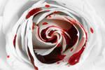 Bleeding Rose (freebie)