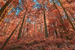 Salmon Woods