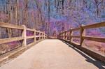 Sage Forest Bridge