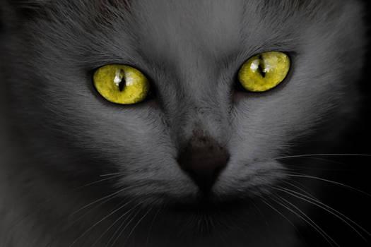 Malicious Kitty (freebie)