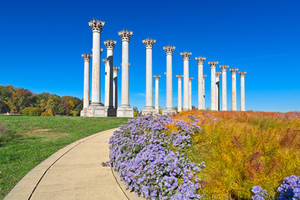 Capitol Arboretum Columns by boldfrontiers