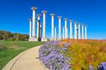 Capitol Arboretum Columns
