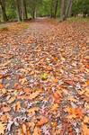 Deep Creek Autumn Path
