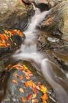 Glen Artney Stream