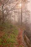 Misty North Point Trail (freebie)