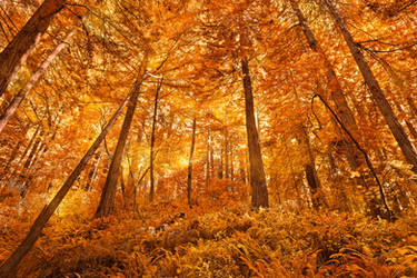 Glowing Amber Forest by boldfrontiers
