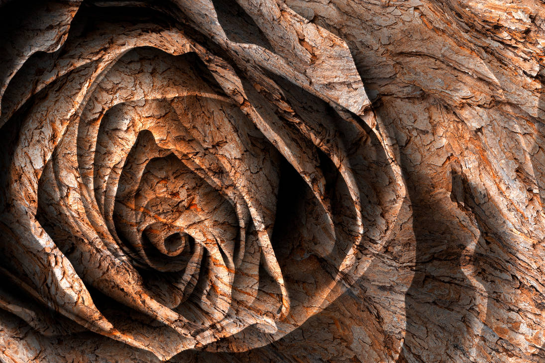 Barking Rose by boldfrontiers
