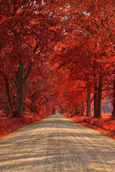 Wye Island Ruby Road