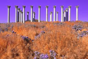 Capitol Fantasy Columns (freebie) by boldfrontiers