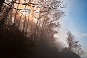 Misty North Point Woods by boldfrontiers