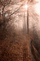 Misty Sun Kissed Trail by boldfrontiers