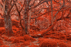 Ruby Moss Forest by boldfrontiers