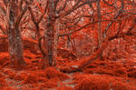 Ruby Moss Forest