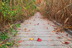 Autumn Marsh Boardwalk