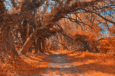Wye Island Amber Trail by boldfrontiers