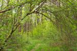 Forest Arch Trail (freebie)