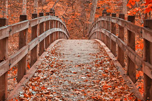 Ruby Red Autumn Bridge by boldfrontiers