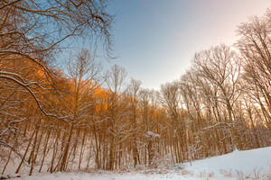 Golden Winter Forest by boldfrontiers