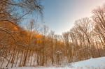 Golden Winter Forest