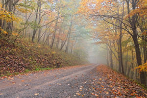 Misty Autumn Forest Road by boldfrontiers
