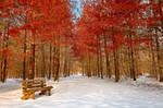 Ruby Winter Trail