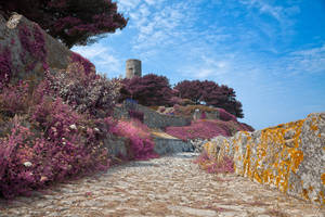 Once Upon a Guernsey Path - Lavender Fantasy by boldfrontiers