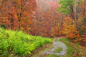 Autumn Potomac Trail by boldfrontiers