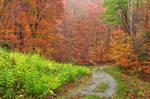Autumn Potomac Trail