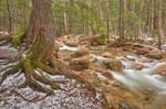Sabbaday Winter Brook