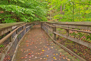 Catoctin Boardwalk Trail by boldfrontiers