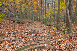 Seneca Fall Forest Trail by boldfrontiers
