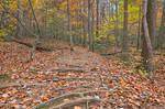 Seneca Fall Forest Trail