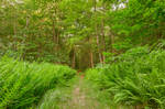 Summer Fern Trail