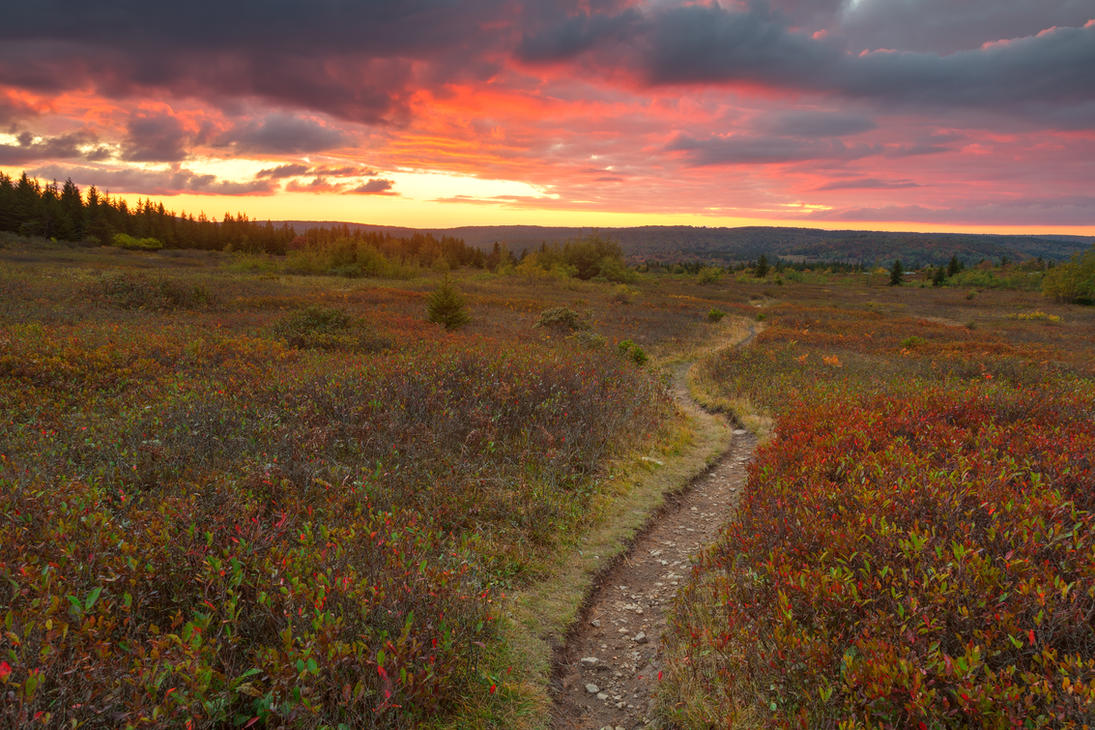 Dolly Sods Twilight Trail By Somadjinn On Deviantart