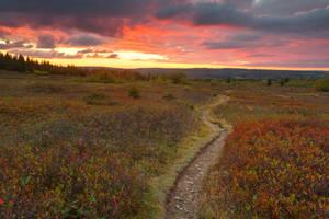 Dolly Sods Twilight Trail