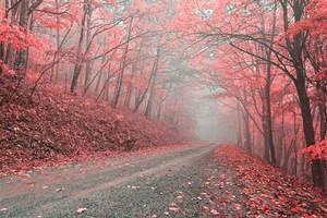 Misty Forest Road - Tickle Me Pink
